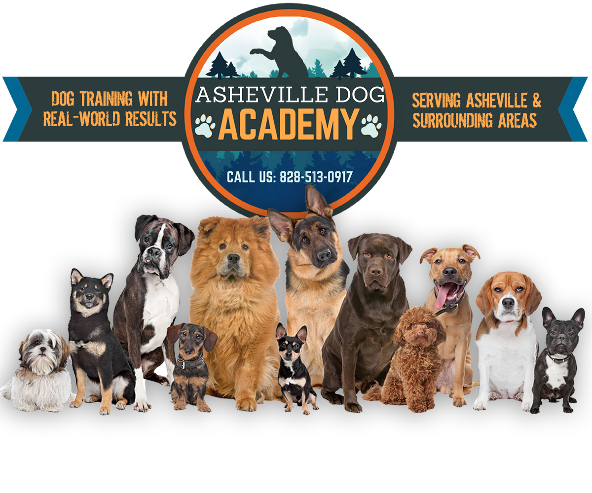 Dog Obedience Training Asheville Nc